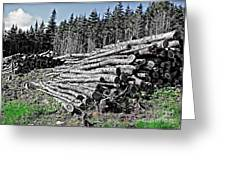 Dry Firewood Greeting Card