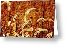 Dry Grass Greeting Card