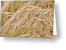 Dry Grass... Greeting Card