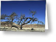 Dry Solitary Tree  Greeting Card