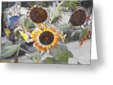 Dry Sunflowers Greeting Card