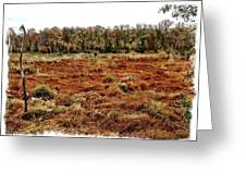 Dry Swamp Greeting Card