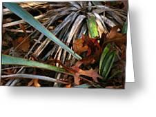 Drycactuscomp 2009 Greeting Card