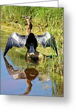 Drying Her Wings Greeting Card