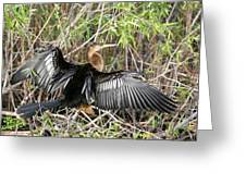 Drying Wings Greeting Card