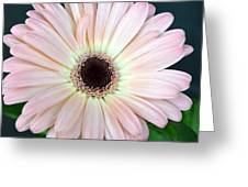 Dsc0001d Greeting Card
