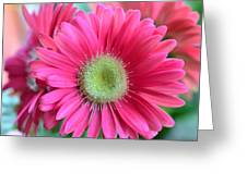 Dsc0020d Greeting Card