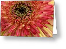 Dsc1003z1-001 Greeting Card