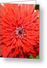 Dsc1516z-006 Greeting Card