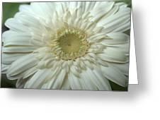 Dsc232-001 Greeting Card
