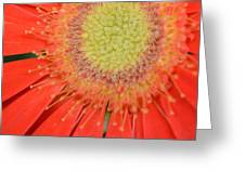 Dsc277-001 Greeting Card