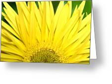 Dsc301d-002 Greeting Card