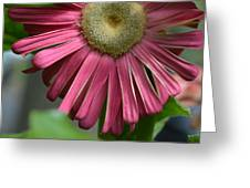 Dsc303-002 Greeting Card