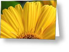 Dsc331d-004 Greeting Card