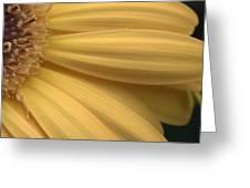 Dsc332-006 Greeting Card