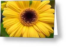 Dsc332d1 Greeting Card
