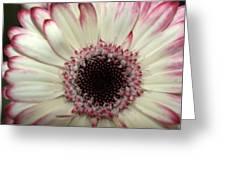 Dsc337-001 Greeting Card
