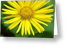 Dsc343d-002 Greeting Card