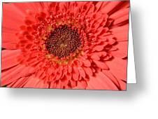 Dsc360d Greeting Card