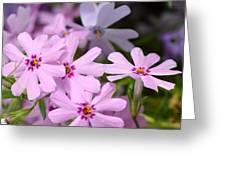 Dsc379d-003 Greeting Card