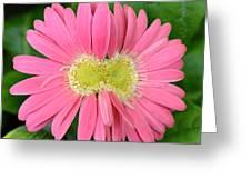 Dsc419d1 Greeting Card
