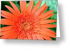 Dsc451d Greeting Card