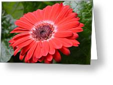 Dsc520-001 Greeting Card