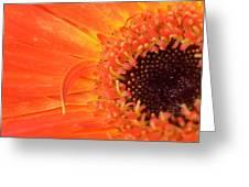 Dsc530-001 Greeting Card
