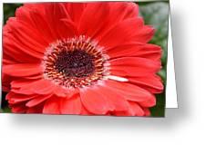 Dsc640d-001 Greeting Card