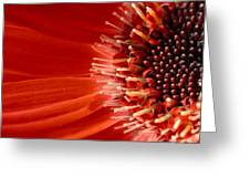 Dsc709d-002 Greeting Card