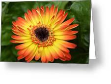 Dsc834d-002 Greeting Card