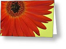 Dsc883d-002 Greeting Card