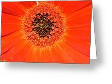 Dsc898d-002 Greeting Card