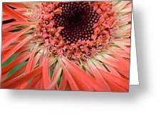 Dsc916d-002 Greeting Card