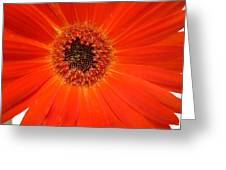 Dscn2633d Greeting Card
