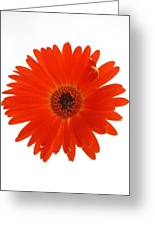 Dscn2651d2 Greeting Card