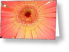 Dscn5240a1 Greeting Card