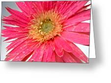 Dscn546911c Greeting Card