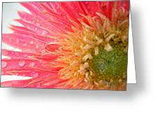 Dscn547911.2.c1 Greeting Card