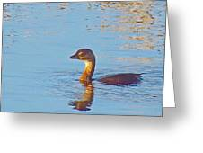 Duck 2133 Greeting Card