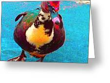 Duck 5515 7 A Greeting Card