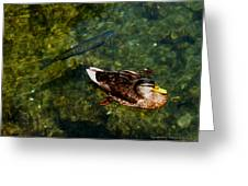 Duck And Fish Greeting Card