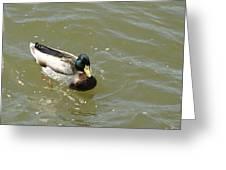 Duck - Animal - 011315 Greeting Card
