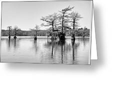 Duck Blind On Caddo Lake Greeting Card