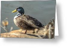 Duck By Pond Greeting Card