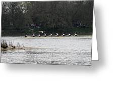 Duck Chasing The Boat Race Greeting Card