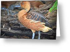 Duck Duck Goose Greeting Card
