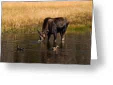 Duck Duck Moose Greeting Card