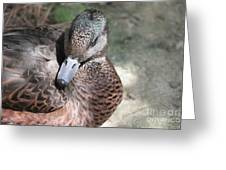 Duck 2 Greeting Card