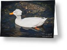 White Crested Duck Greeting Card
